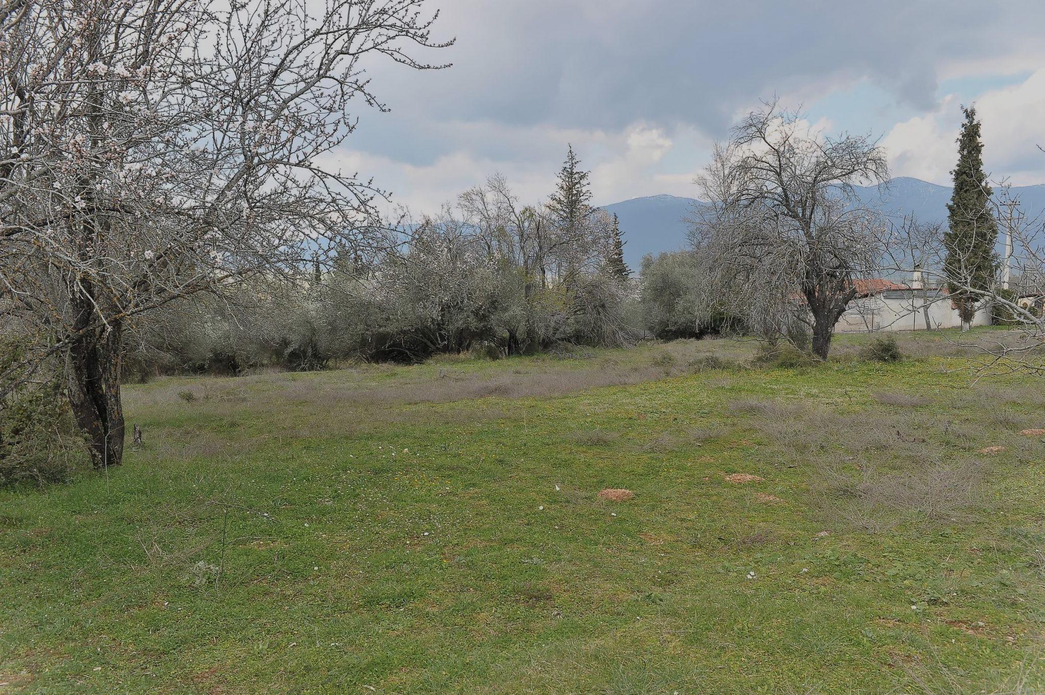 Terreno Parnassos  -  ref GR-5158-S (picture 2)