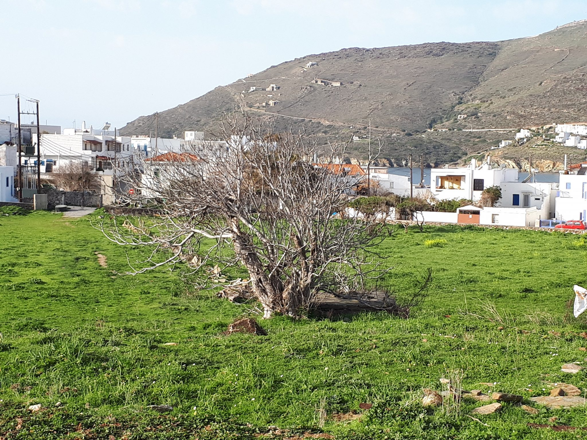 Terreno Andros  -  ref GR-4264-S (picture 3)