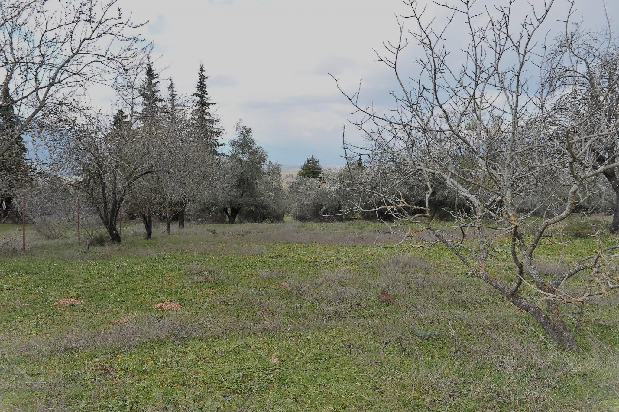 Terreno Parnassos  -  ref GR-5158-S (picture 3)