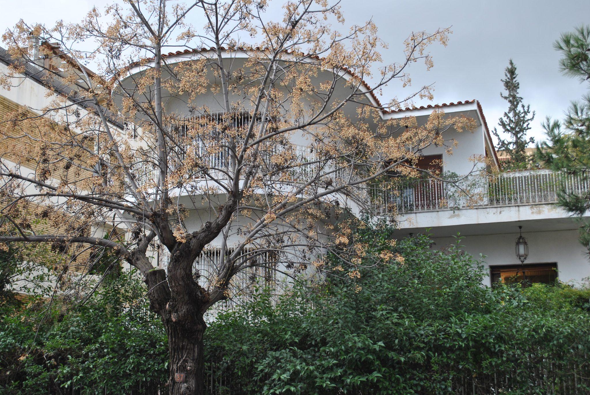 Casa, Psychiko - Ref GR-5120